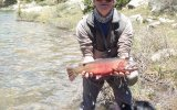 Big Cutthroats are working the high lakes of the Collegiate Peaks